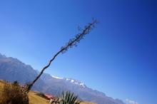terrasses incas concentriques Moray