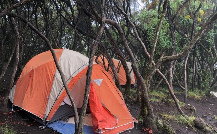 TANZANIE- Kilimandjaro – J8 Camp Barafu – Mweka Camp – D-2647m