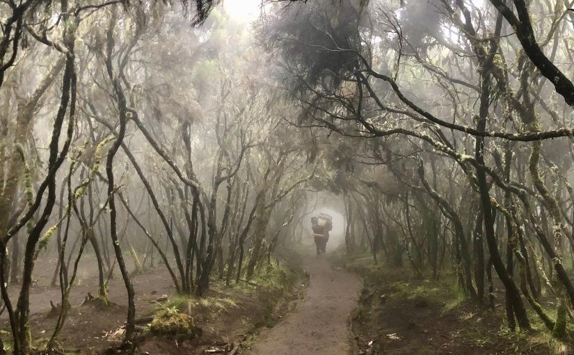 TANZANIE- Kilimandjaro – J9 Mweka Camp – Mweka gate – Arusha –D- 1418m