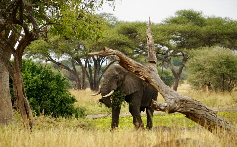 TANZANIE- SAFARI – J1 Parc duTarangire